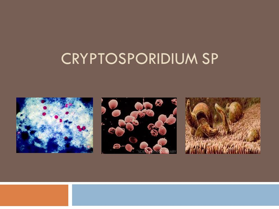 INTERESTING FACT  Cattle alone produce about 4.57 tons of Cryptosporidium oocysts per year in the US BEWARE !