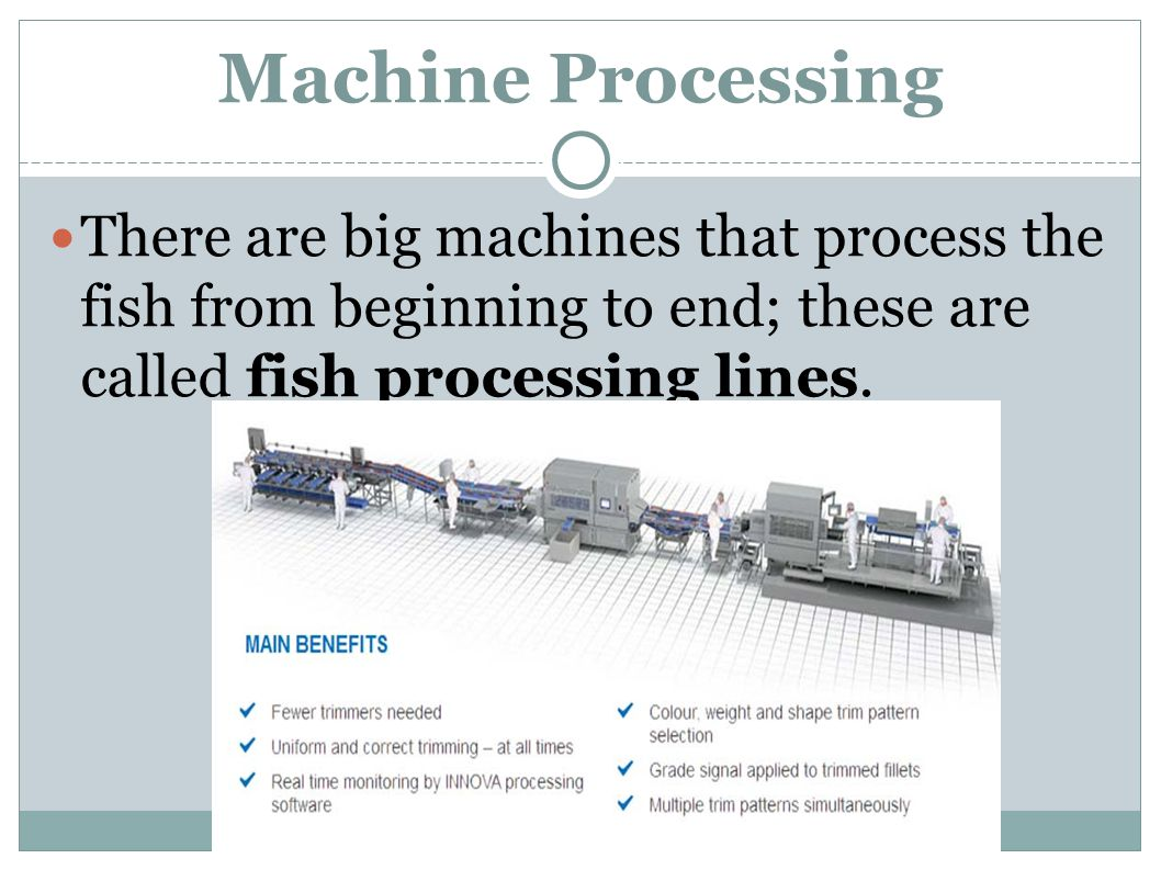 There are big machines that process the fish from beginning to end; these are called fish processing lines.