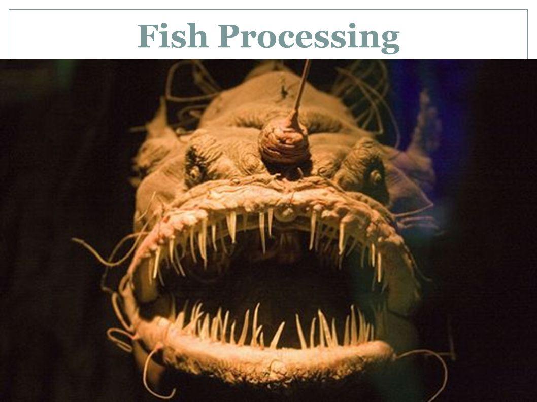 3/30/14 Fish Processing