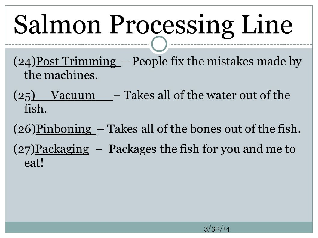 Salmon Processing Line (24)Post Trimming – People fix the mistakes made by the machines.
