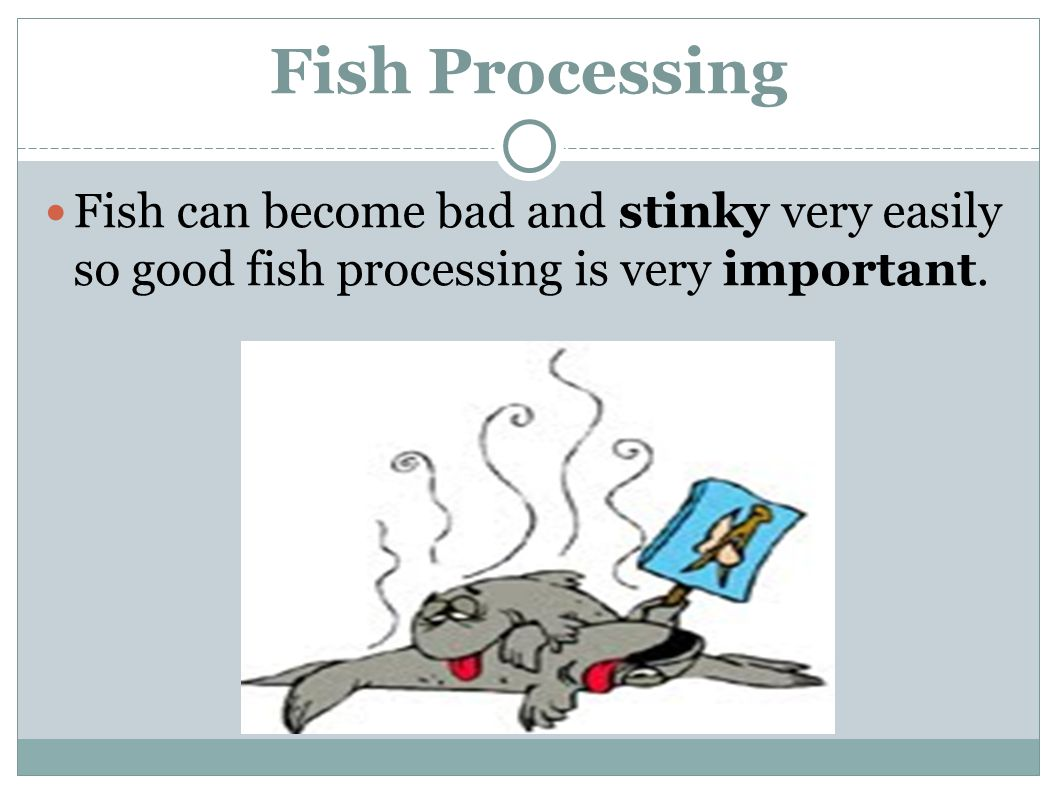 Fish can become bad and stinky very easily so good fish processing is very important.