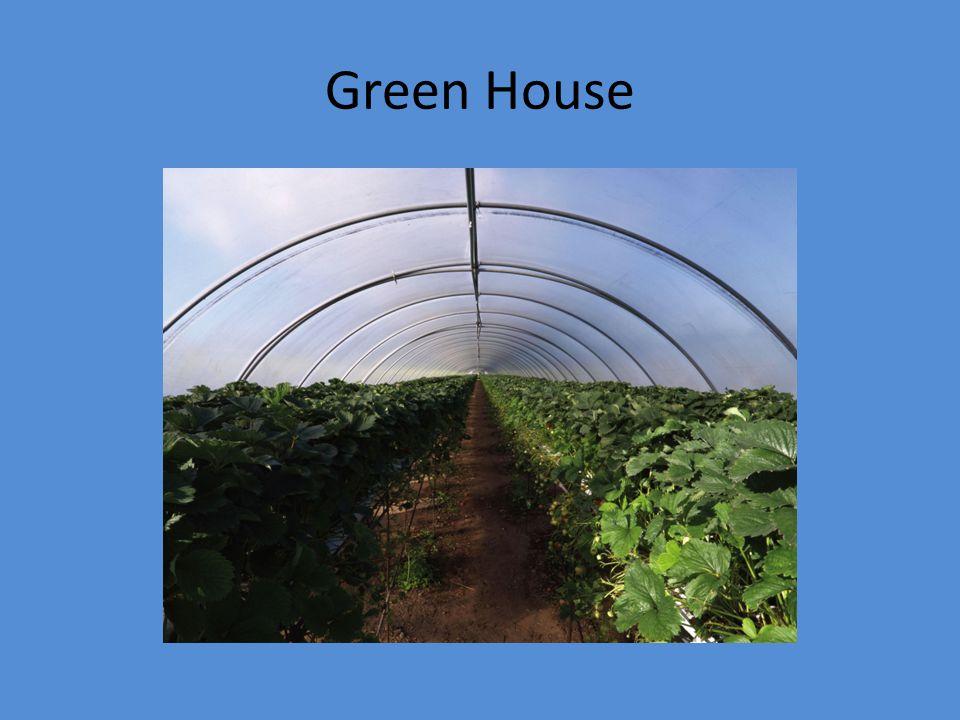 Green House