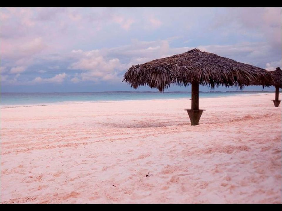 Coral Pink Sand Beach is a beach between palm trees and pink sand in Harbour Island, Bahamas. Its color is due to sedimentation of coral origin rosace