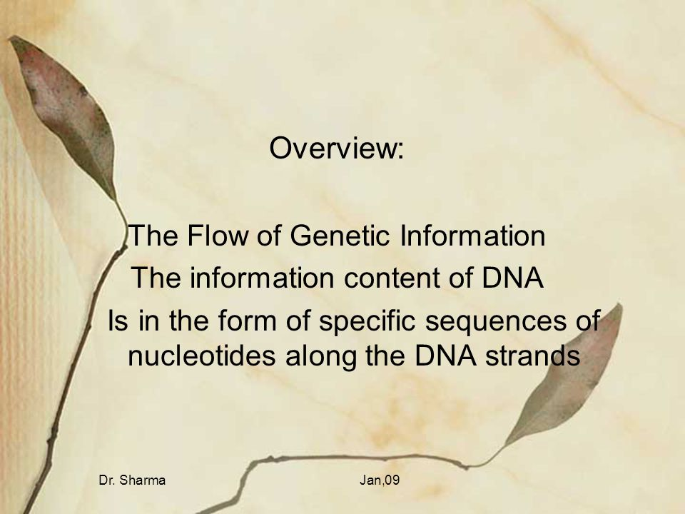 Dr. SharmaJan,09 Overview: The Flow of Genetic Information The information content of DNA Is in the form of specific sequences of nucleotides along th