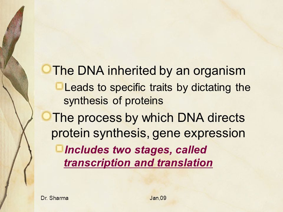 Dr. SharmaJan,09 The DNA inherited by an organism Leads to specific traits by dictating the synthesis of proteins The process by which DNA directs pro