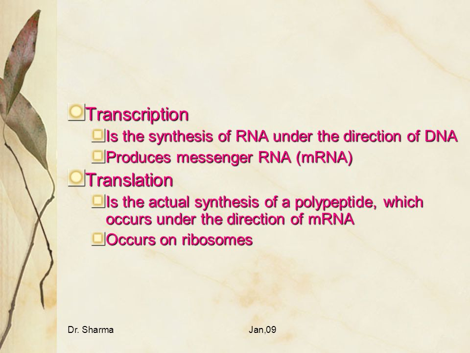 Dr. SharmaJan,09 Transcription Is the synthesis of RNA under the direction of DNA Produces messenger RNA (mRNA) Translation Is the actual synthesis of