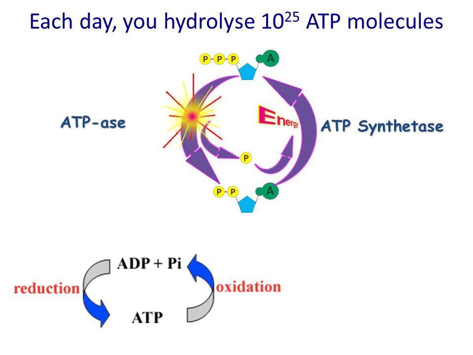 H2OH2O HYDROLYSIS (Adding H 2 O)