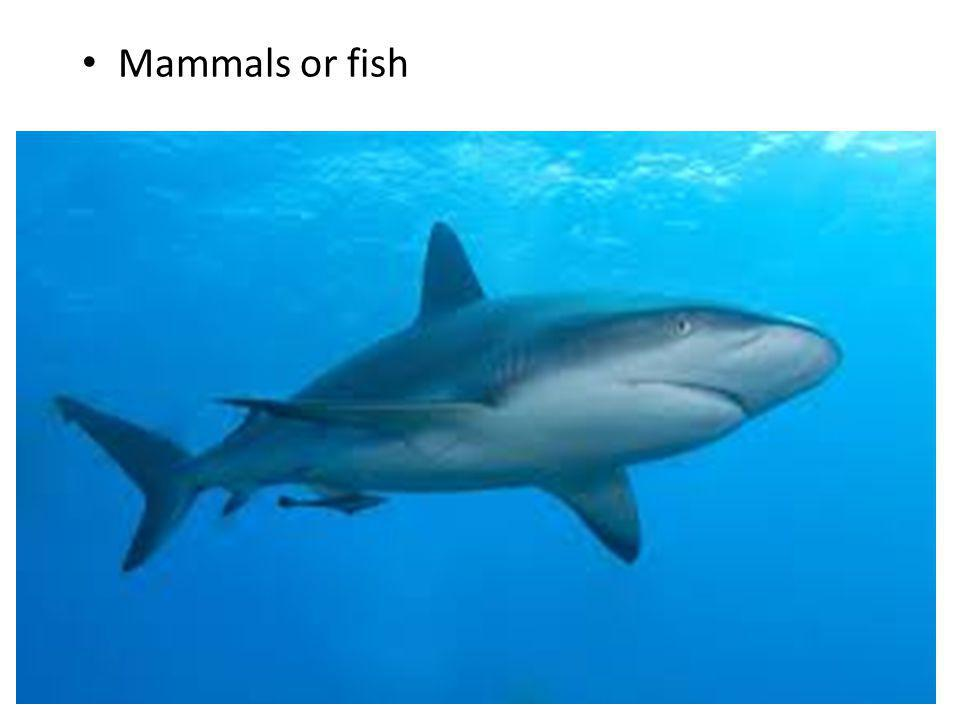 Mammals or fish