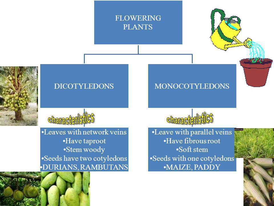 PLANTS FLOWERING PLANTS NON FLOWERING PLANTS 1.ALGAE 2.MOSS 3.FERN 4.FUNGUS
