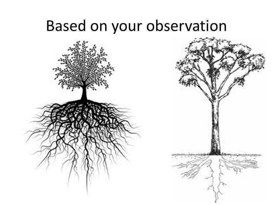 Based on your observation