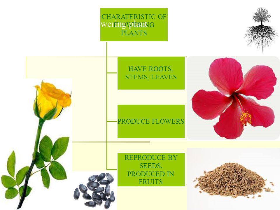 NON FLOWERING PLANTS ALGAEFUNGUSFERNMOSS