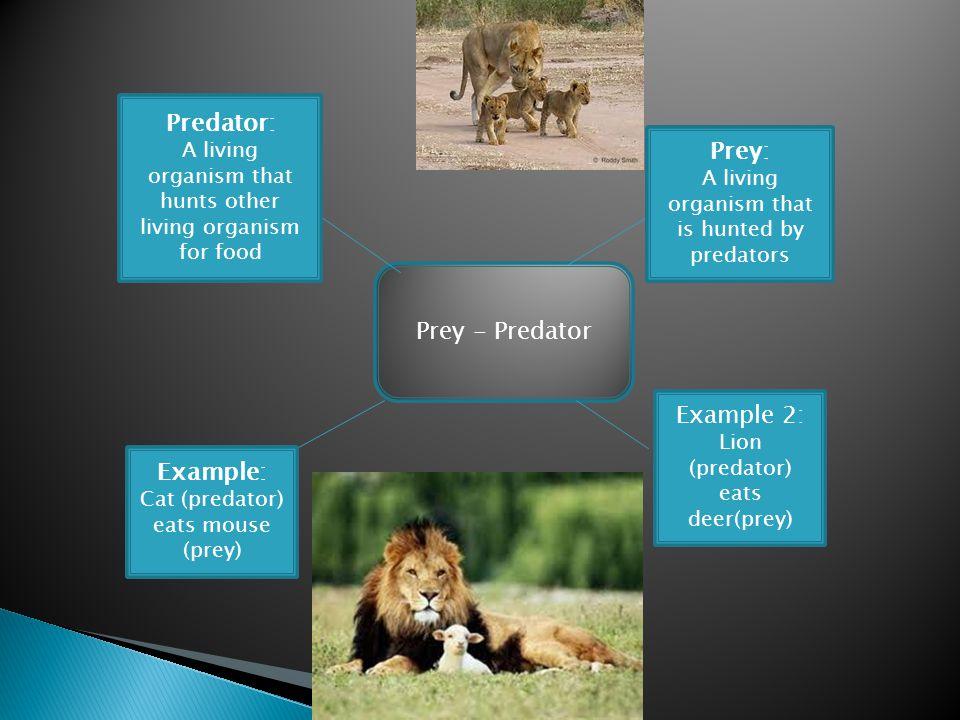 Prey - Predator Predator: A living organism that hunts other living organism for food Prey: A living organism that is hunted by predators Example: Cat (predator) eats mouse (prey) Example 2: Lion (predator) eats deer(prey)