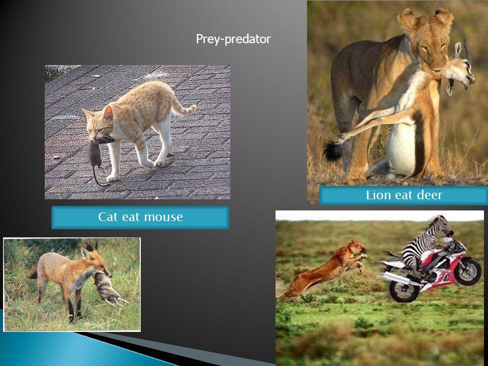 Cat eat mouse Lion eat deer Prey-predator