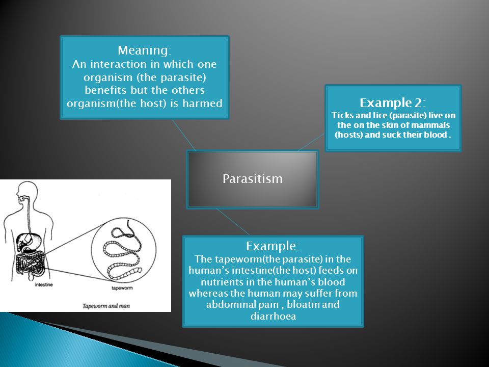 Parasitism Meaning: An interaction in which one organism (the parasite) benefits but the others organism(the host) is harmed Example: The tapeworm(the