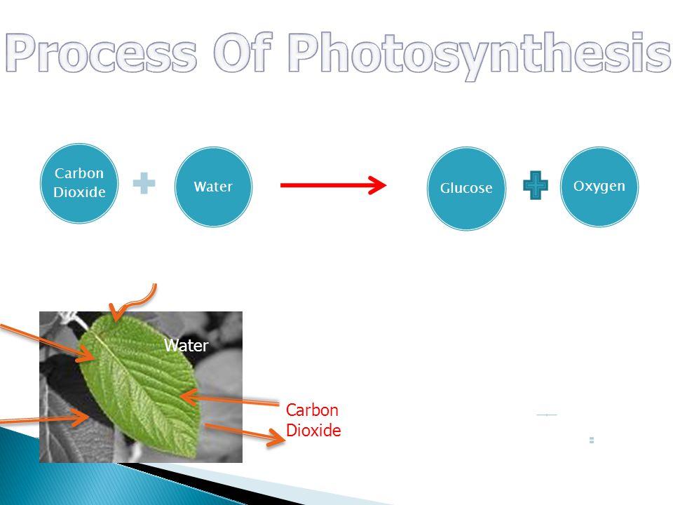 Carbon Dioxide Water Glucose Oxygen Sun Light chlorophyll Water Sunlight oxygen Carbon Dioxide