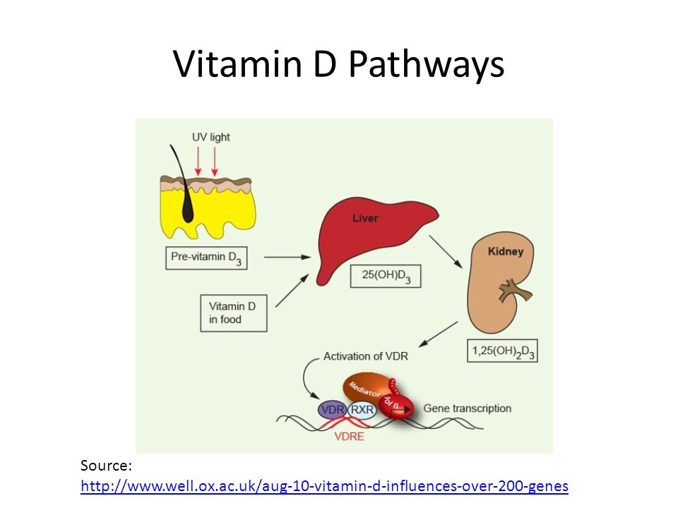 Vitamin D Pathways Source: http://www.well.ox.ac.uk/aug-10-vitamin-d-influences-over-200-genes