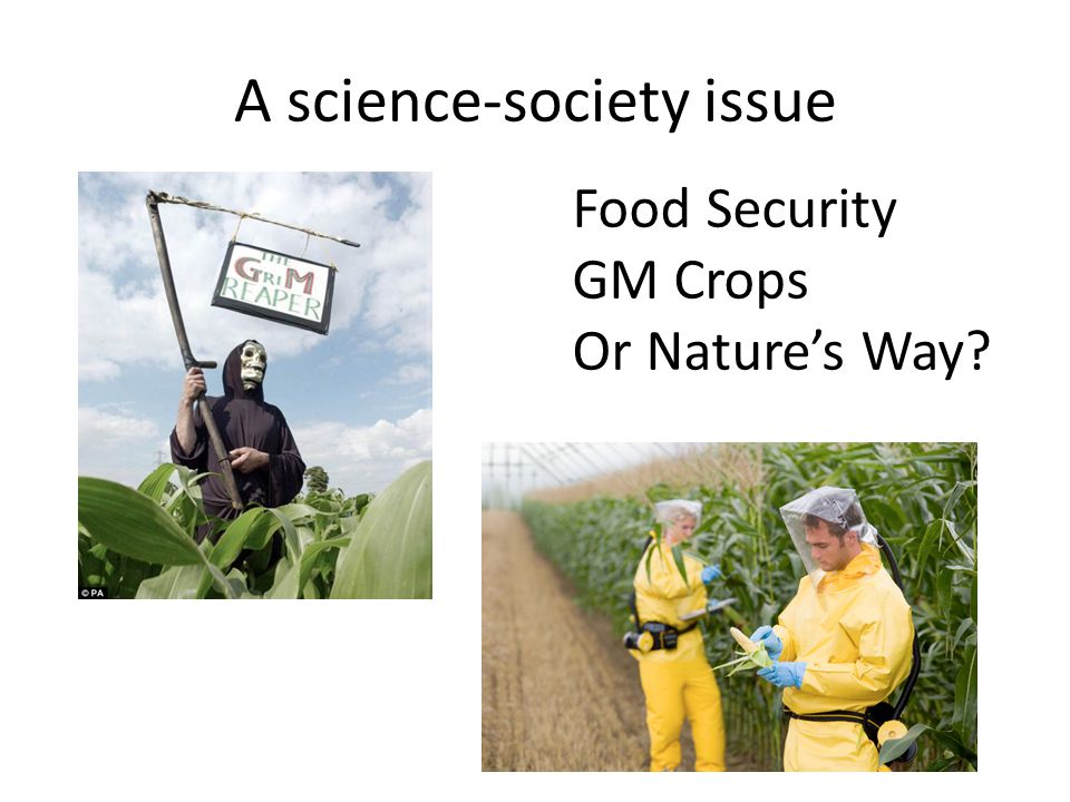 A science-society issue Food Security GM Crops Or Nature's Way?