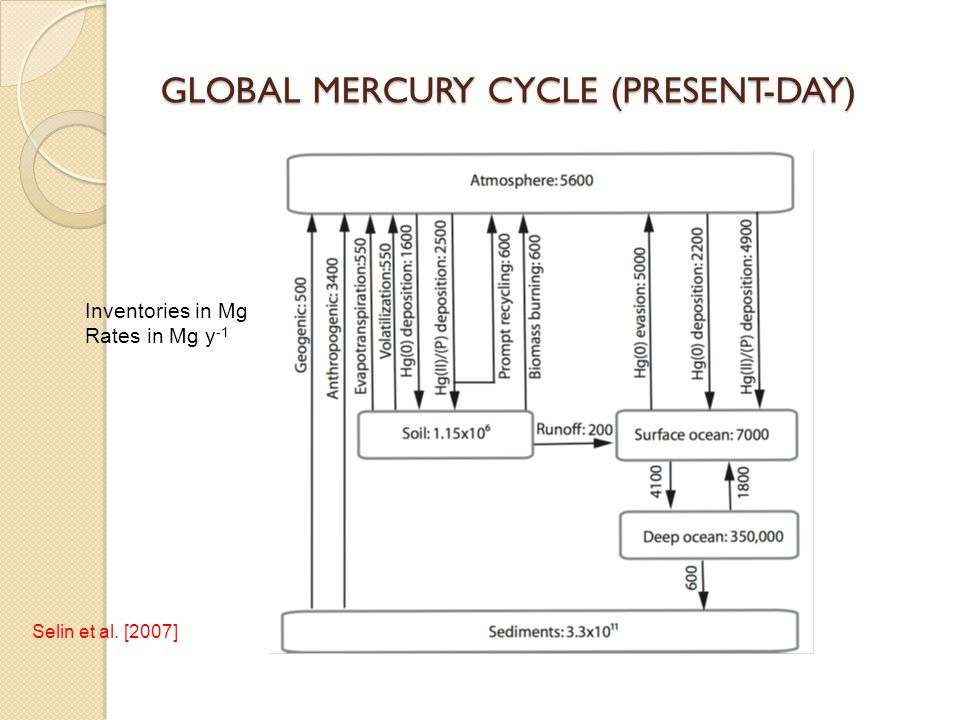 GLOBAL MERCURY CYCLE (PRESENT-DAY) Inventories in Mg Rates in Mg y -1 Selin et al. [2007]