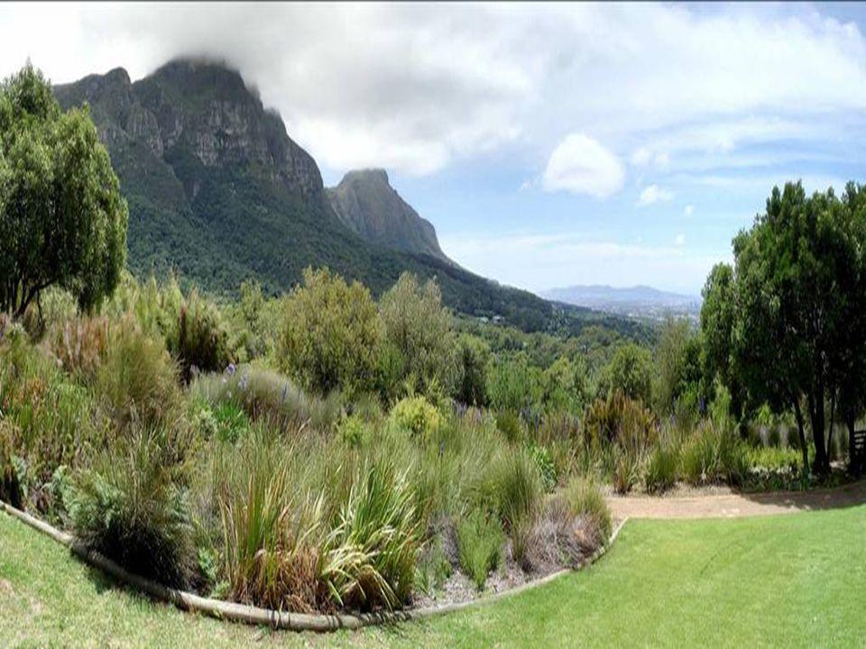 7. Kirstenbosch Botanical Gardens Cape Town, South Africa