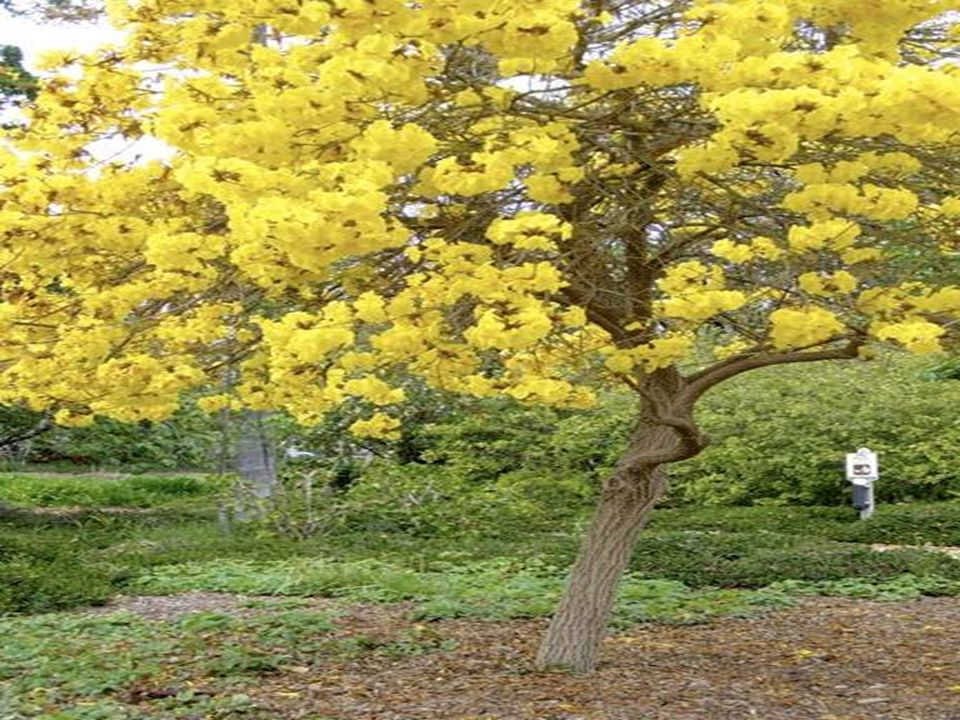 9. Abraham Lincoln Memorial Gardens Springfield, Illinois, USA