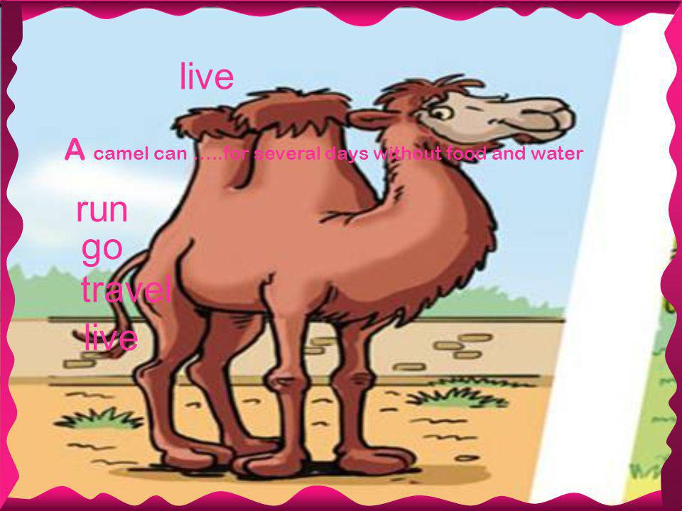 live A camel can …..for several days without food and water travel live run go