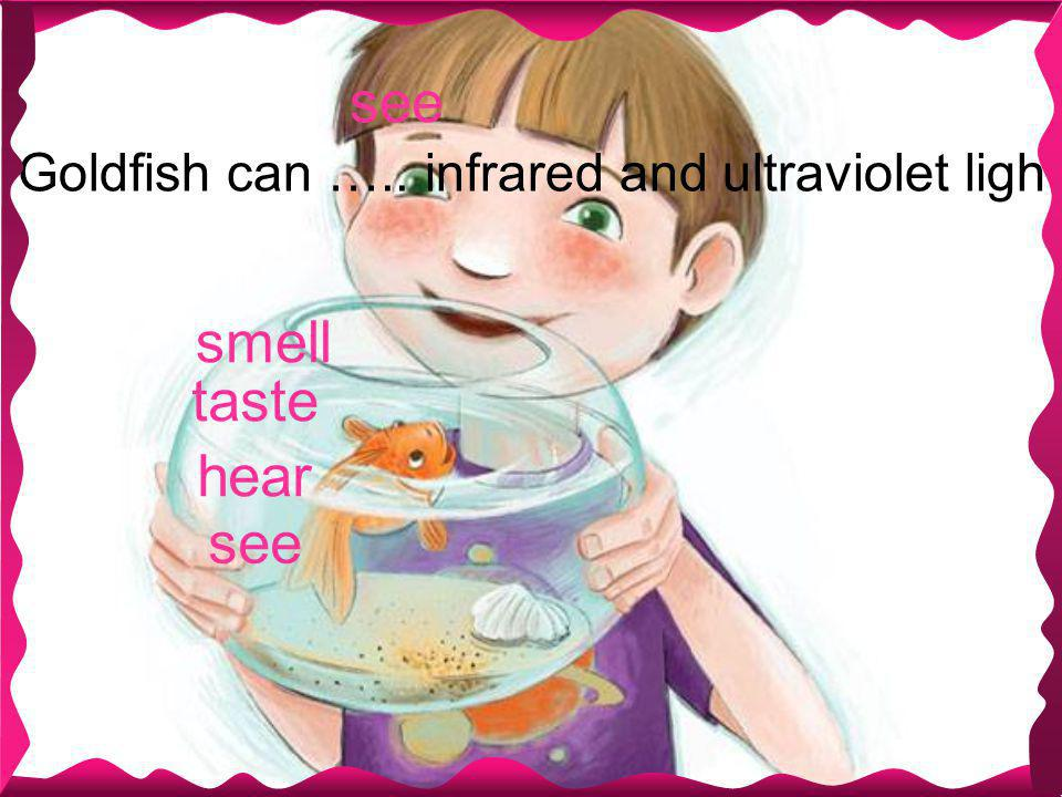 see Goldfish can ….. infrared and ultraviolet light. smell see taste hear