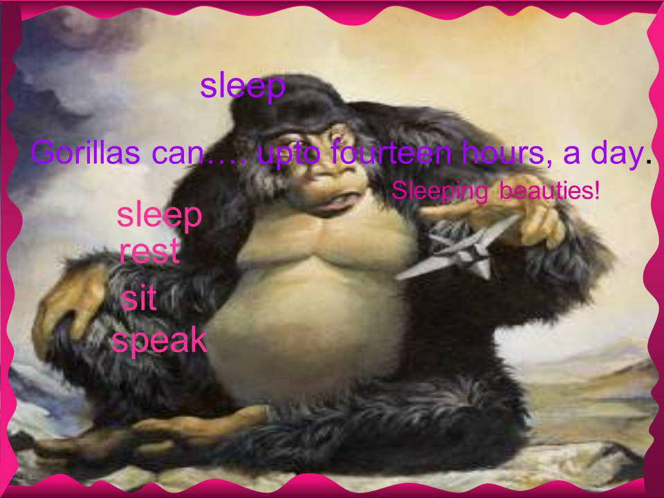 sleep Gorillas can…. upto fourteen hours, a day. speak sleep rest sit Sleeping beauties!