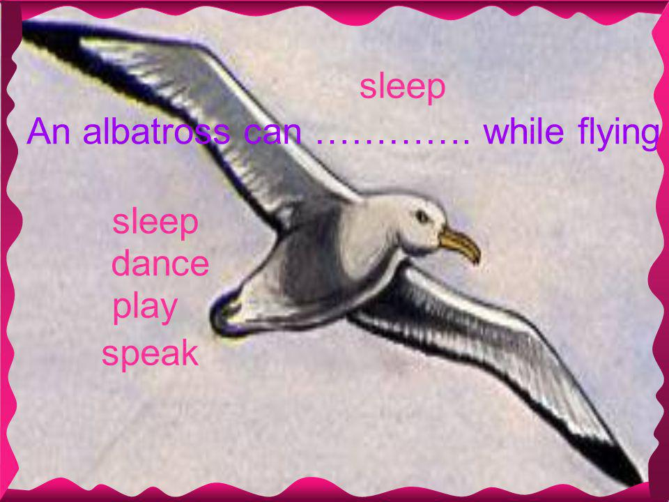 sleep An albatross can …………. while flying speak sleep dance play