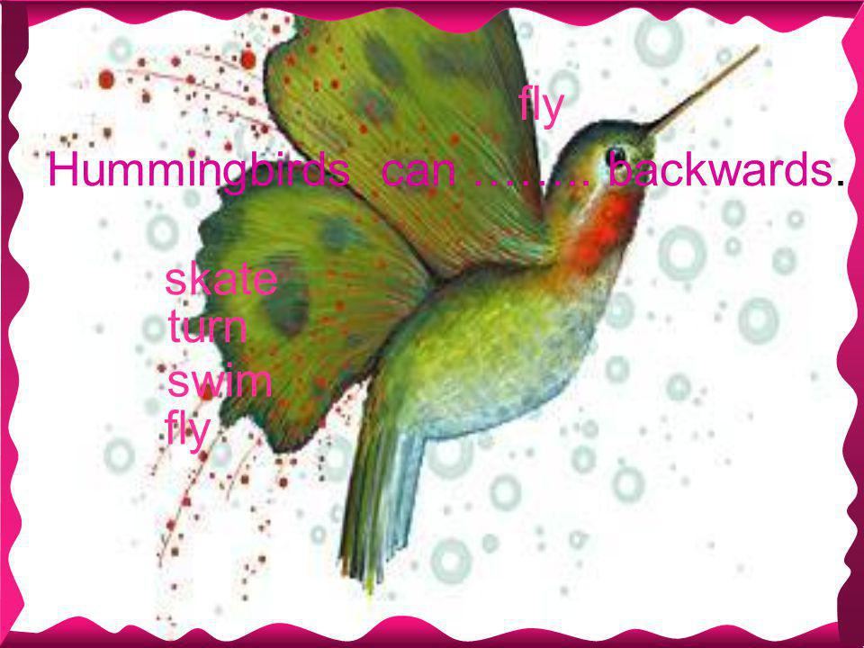 fly Hummingbirds can …….. backwards. skate fly turn swim