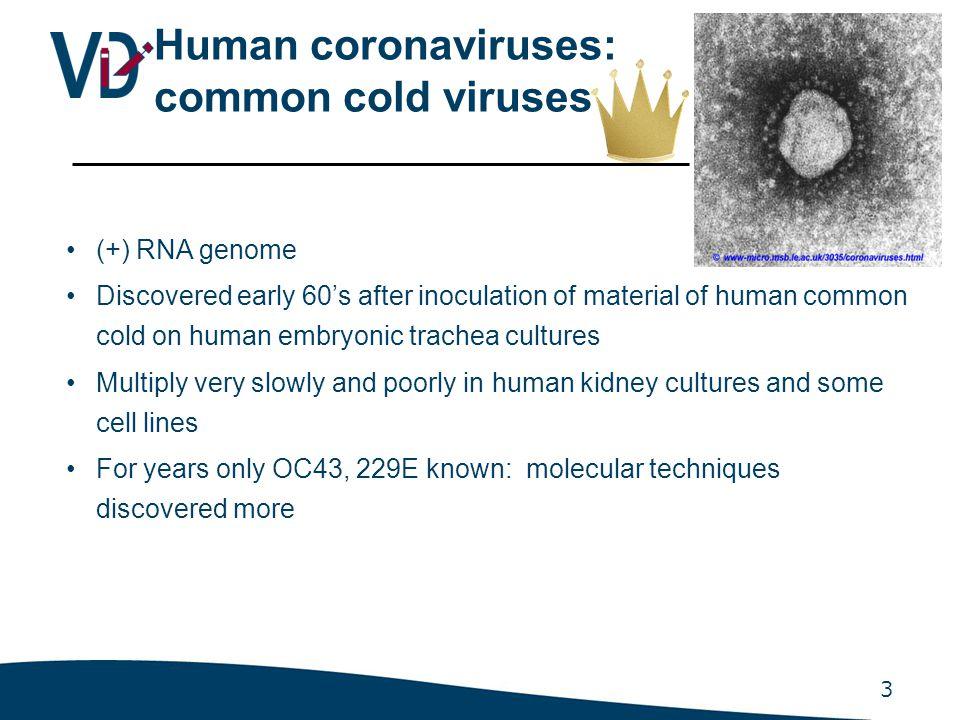 4 2003: HCoV SARS Novel coronavirus identified in SARS patients