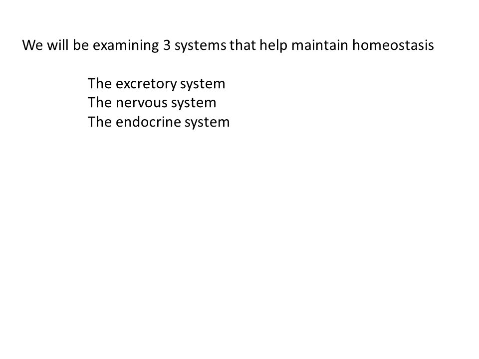 We will be examining 3 systems that help maintain homeostasis The excretory system The nervous system The endocrine system