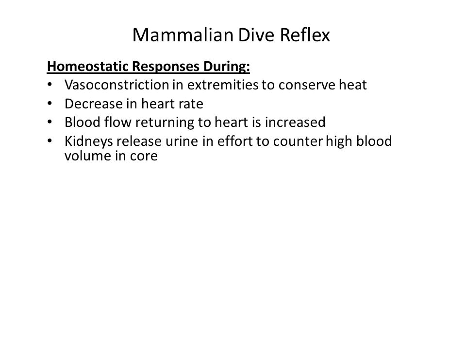 Mammalian Dive Reflex Homeostatic Responses During: Vasoconstriction in extremities to conserve heat Decrease in heart rate Blood flow returning to he