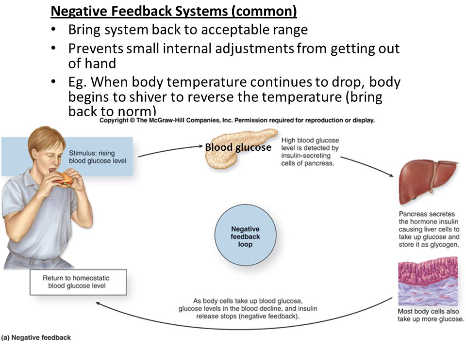 Negative Feedback Systems (common) Bring system back to acceptable range Prevents small internal adjustments from getting out of hand Eg. When body te