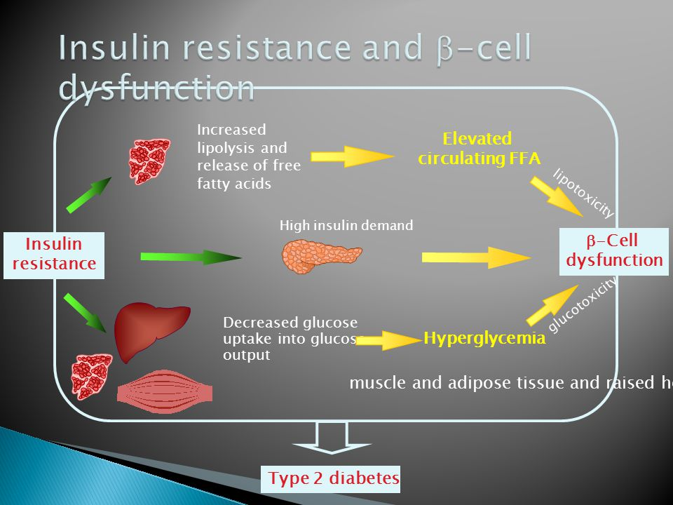 Insulin resistance High insulin demand glucotoxicity lipotoxicity Increased lipolysis and release of free fatty acids Elevated circulating FFA Decreased glucose uptake into glucose output Hyperglycemia Type 2 diabetes  -Cell dysfunction muscle and adipose tissue and raised hepatic