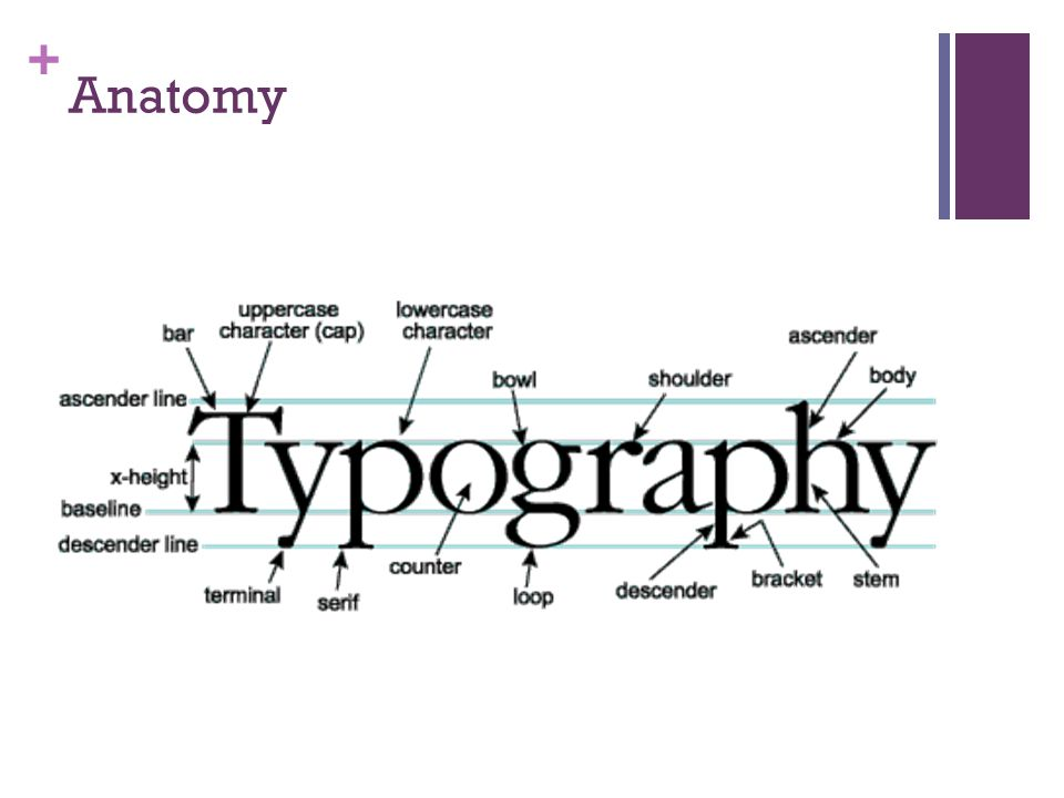 + Classifications coarse serifs, small x-heights, stress is diagonal, ascenders often exceed the height greater contrast, bracketed serifs, larger x-height, vertical stress extreme contrast, hairline serifs, small x-height, vertical stress in rounded strokes minimal variation, heavy serifs, large x-heights, vertical stress no variation, lack of serifs, larger x-height, no stress
