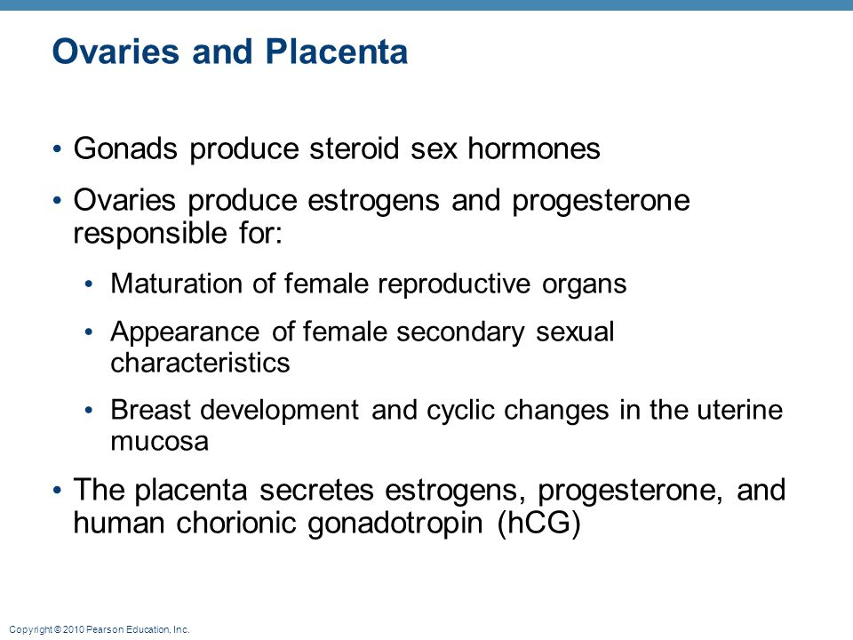 Copyright © 2010 Pearson Education, Inc. Ovaries and Placenta Gonads produce steroid sex hormones Ovaries produce estrogens and progesterone responsib