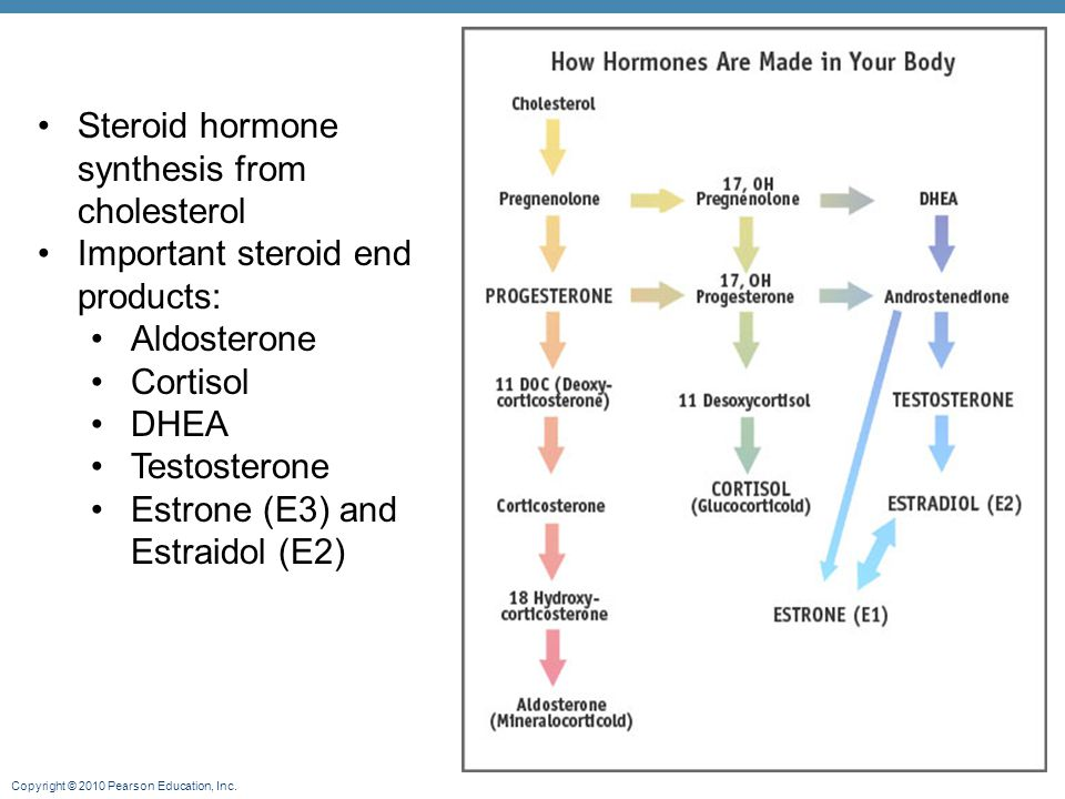 Copyright © 2010 Pearson Education, Inc. Steroid hormone synthesis from cholesterol Important steroid end products: Aldosterone Cortisol DHEA Testoste