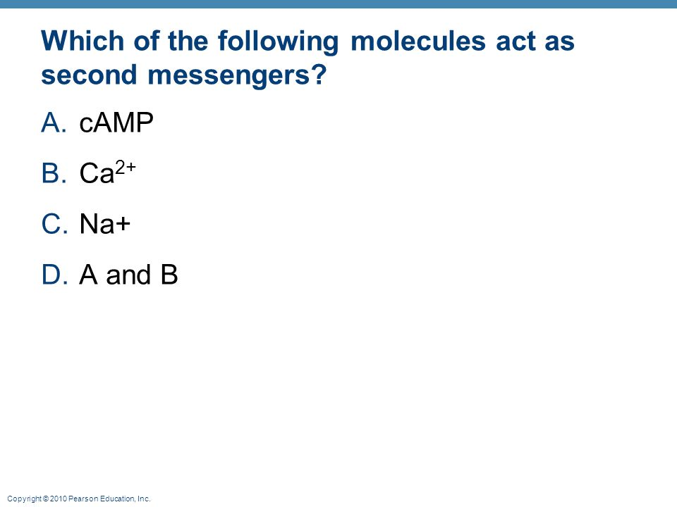 Copyright © 2010 Pearson Education, Inc. Which of the following molecules act as second messengers? A.cAMP B.Ca 2+ C.Na+ D.A and B