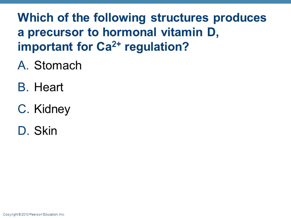 Copyright © 2010 Pearson Education, Inc. Which of the following structures produces a precursor to hormonal vitamin D, important for Ca 2+ regulation?
