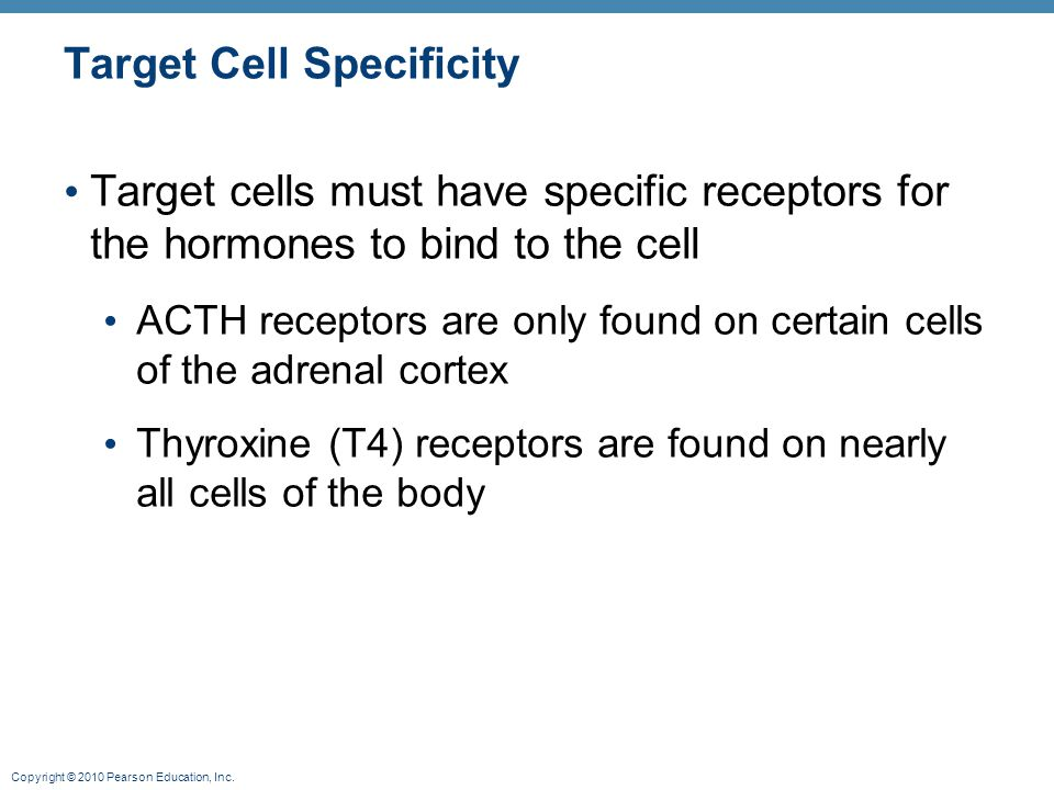 Copyright © 2010 Pearson Education, Inc. Target Cell Specificity Target cells must have specific receptors for the hormones to bind to the cell ACTH r