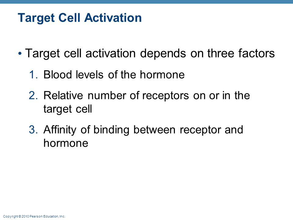 Copyright © 2010 Pearson Education, Inc. Target Cell Activation Target cell activation depends on three factors 1.Blood levels of the hormone 2.Relati