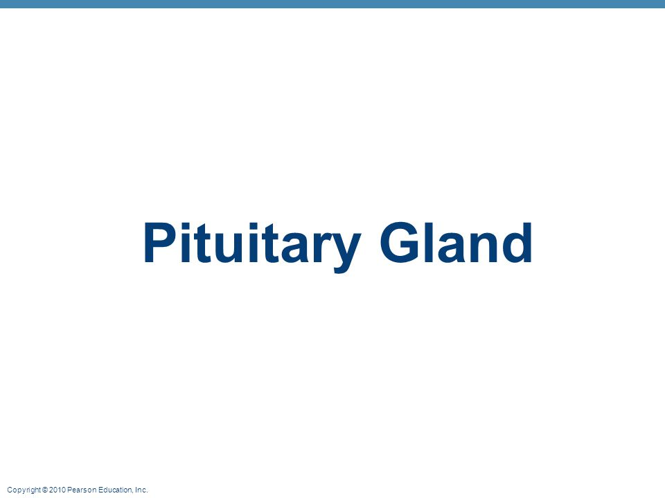 Copyright © 2010 Pearson Education, Inc. Pituitary Gland