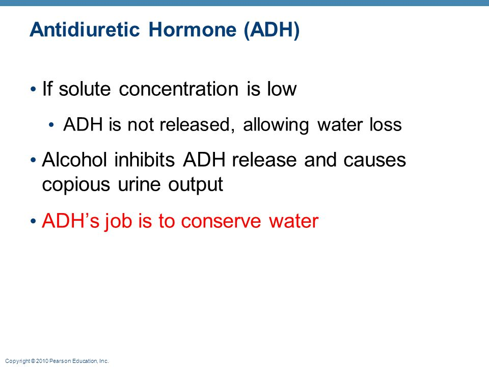 Copyright © 2010 Pearson Education, Inc. Antidiuretic Hormone (ADH) If solute concentration is low ADH is not released, allowing water loss Alcohol in