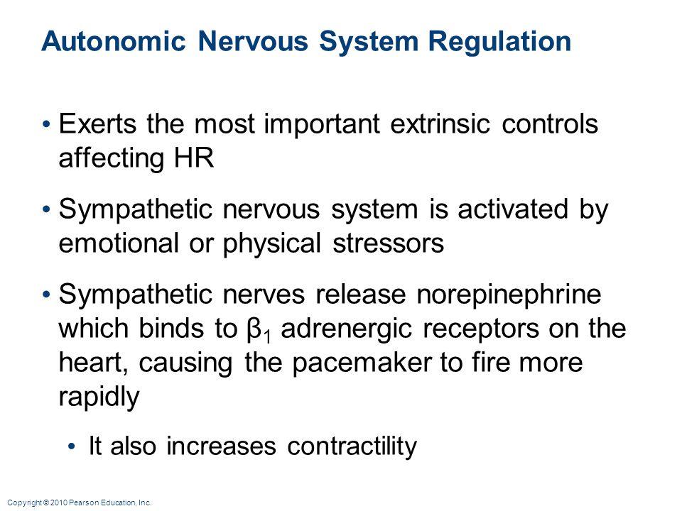 Copyright © 2010 Pearson Education, Inc. Autonomic Nervous System Regulation Exerts the most important extrinsic controls affecting HR Sympathetic ner