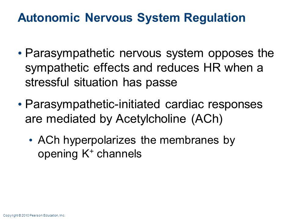 Copyright © 2010 Pearson Education, Inc. Autonomic Nervous System Regulation Parasympathetic nervous system opposes the sympathetic effects and reduce