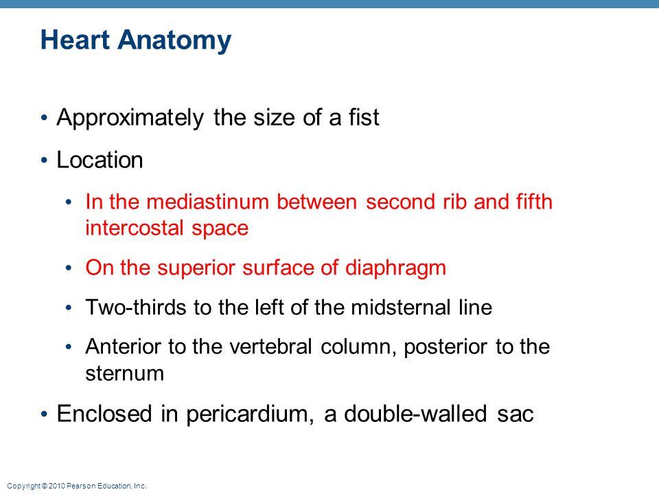 Copyright © 2010 Pearson Education, Inc. Electrocardiography