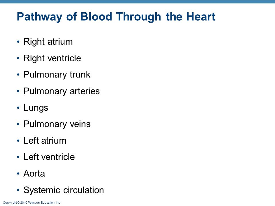 Copyright © 2010 Pearson Education, Inc. Pathway of Blood Through the Heart Right atrium Right ventricle Pulmonary trunk Pulmonary arteries Lungs Pulm
