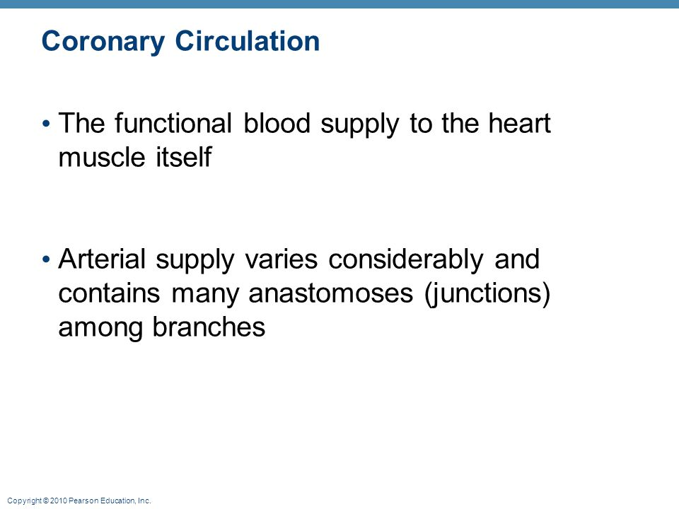 Copyright © 2010 Pearson Education, Inc. Coronary Circulation The functional blood supply to the heart muscle itself Arterial supply varies considerab