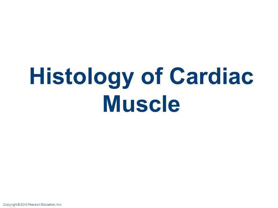 Copyright © 2010 Pearson Education, Inc. Histology of Cardiac Muscle