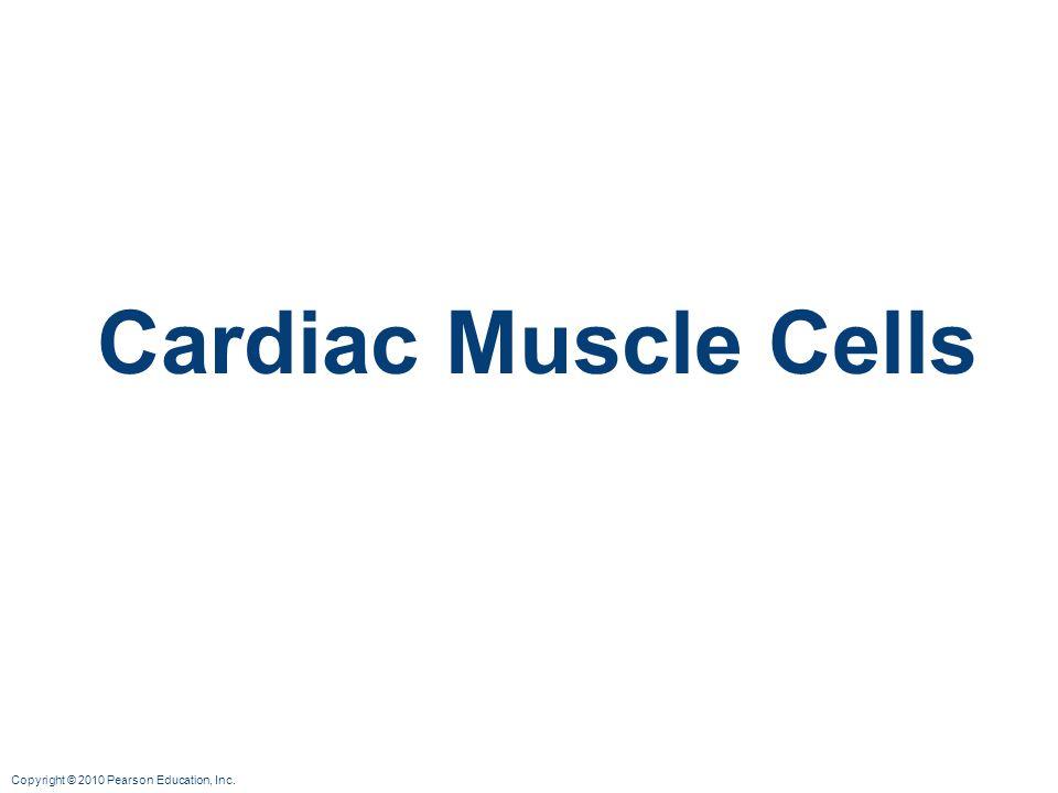 Copyright © 2010 Pearson Education, Inc. Cardiac Muscle Cells
